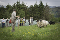 Sheepdog Handling at Drumcorroy